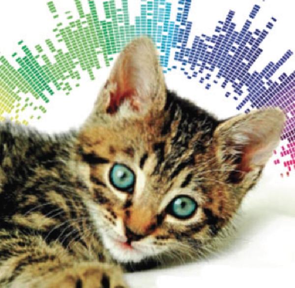 Il colore, una cura dolce per gli animali